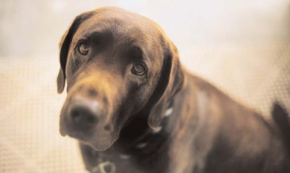Very-Sad-Looking-Dog