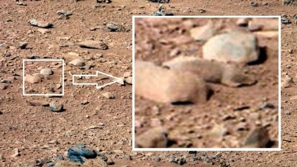 Mars Rat Big