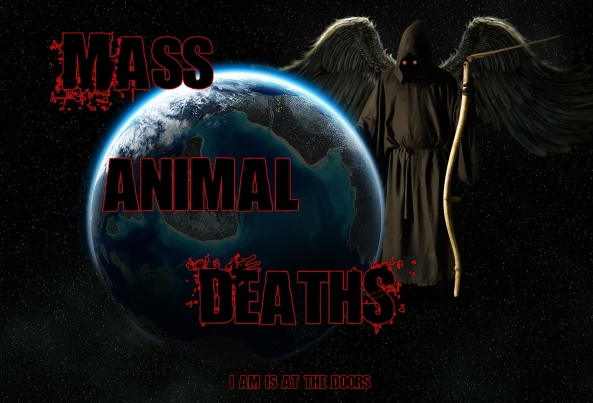 Mass-Animal-Deaths-I-AM-is-at-the-doors